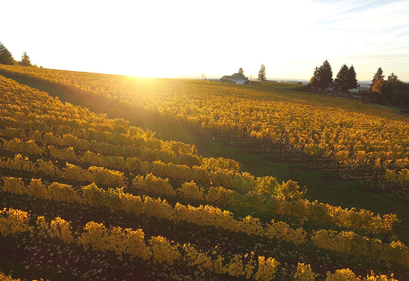 Bjornson Vineyard Eola-Amity Hills