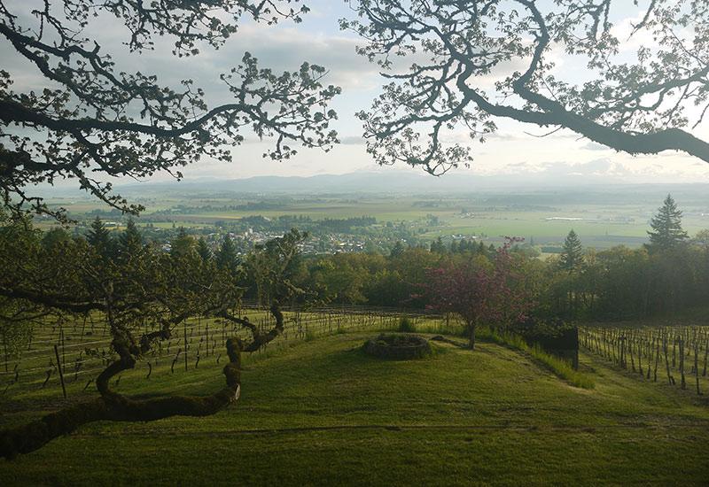 Bois-Joli Vineyard Eola-Amity Hills