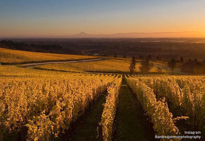 Cristom Vineyard Eola-Amity Hills