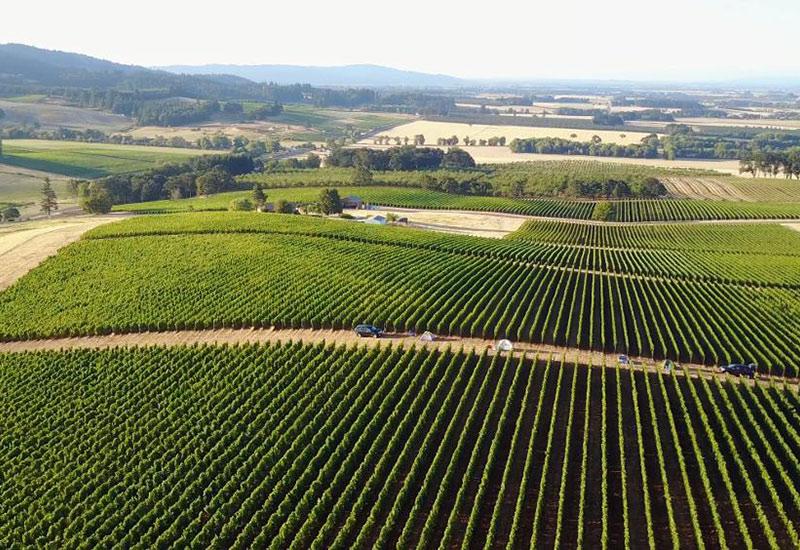 Holloran Vineyards Eola-Amity Hills