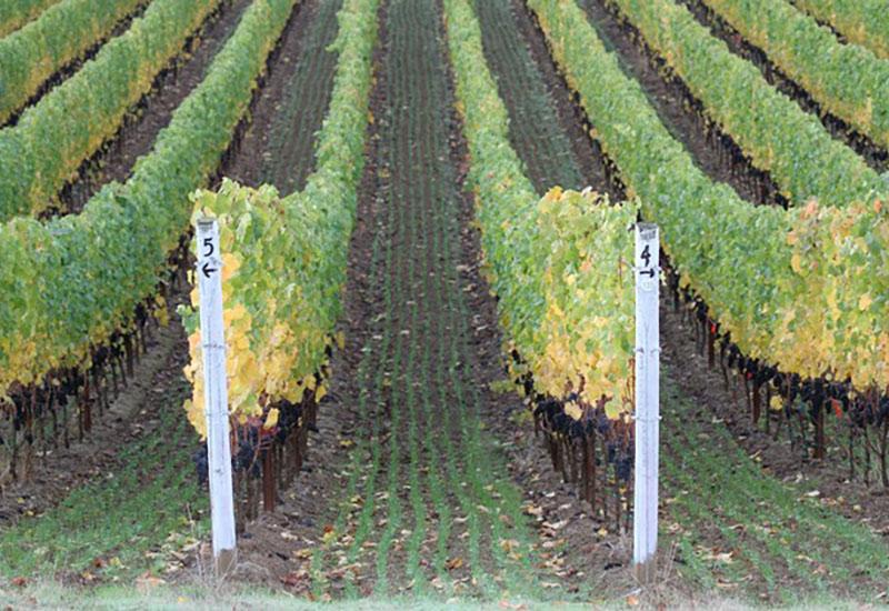 Julon Vineyard Eola-Amity Hills