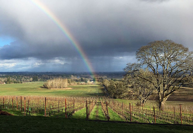 Le Puits Sec Vineyard Oregon