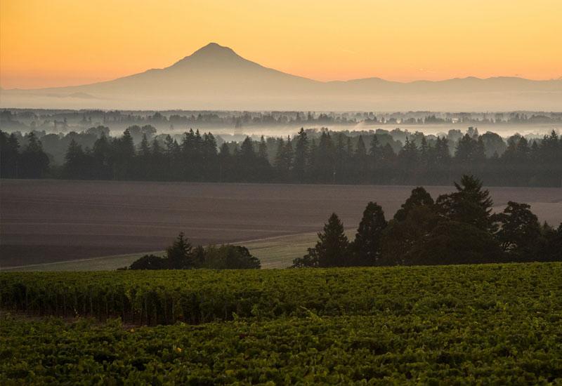 Lone Star Vineyard Oregon