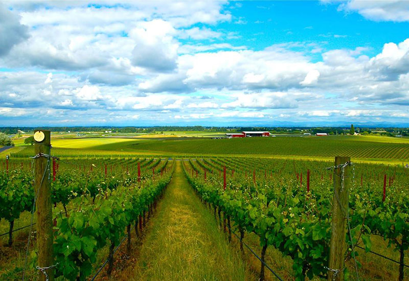 Methven Vineyard Oregon