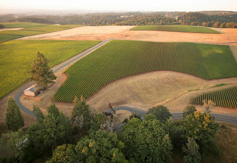 Roserock Vineyard Eola-Amity Hills