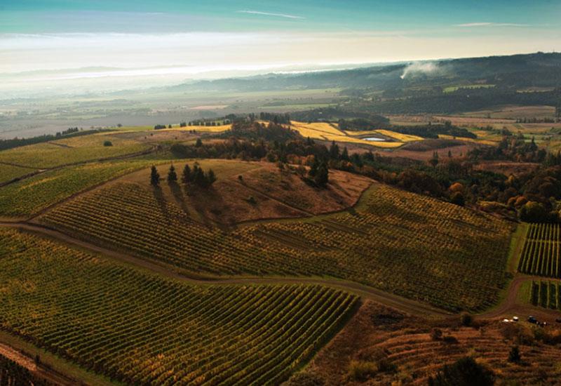 Temperance Hill Vineyard Eola-Amity Hills