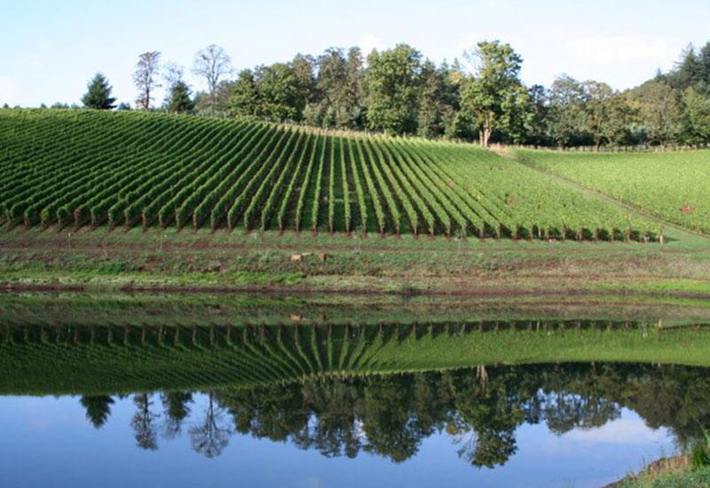 Dukes Vineyard Eola-Amity Hills