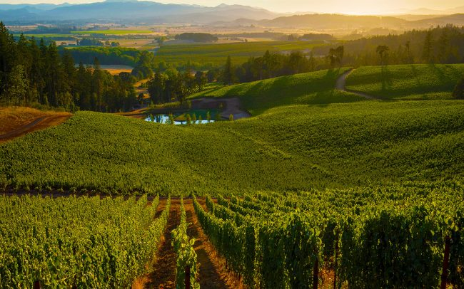 Best Oregon Vineyards Eola-Amity Hills