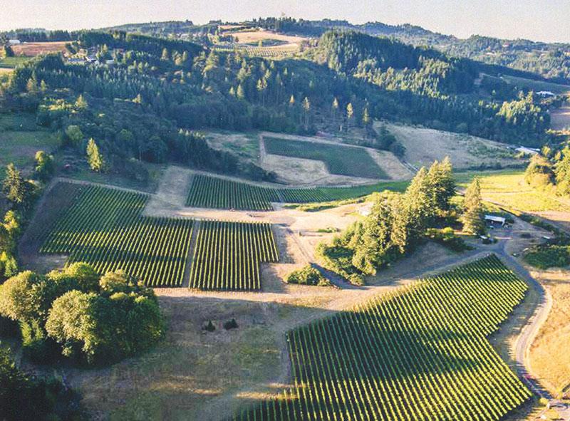 Crawford Beck Vineyard Oregon Best Vineyard Eola-Amity Hills