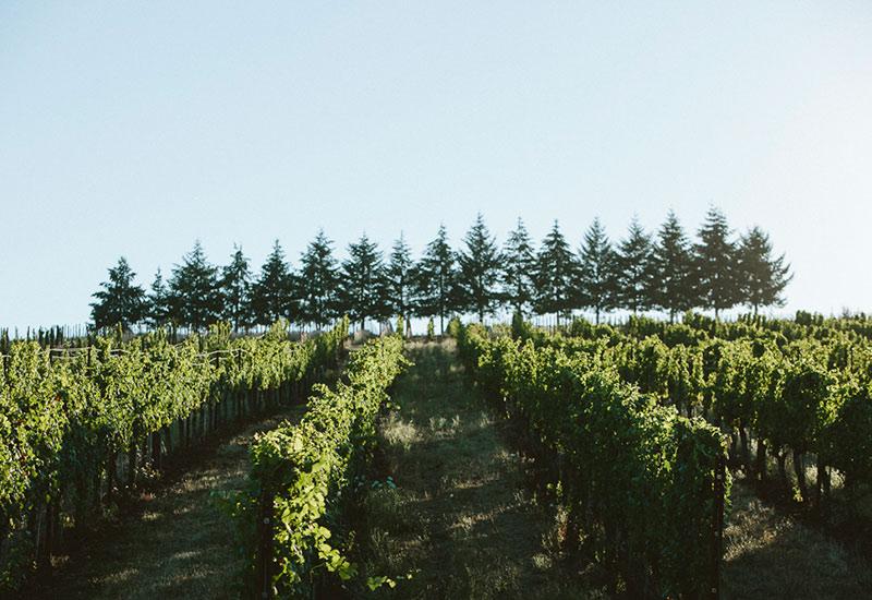 Seven Springs Vineyard Evening Land